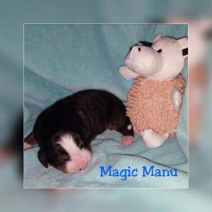 Magic Manu 22.11.