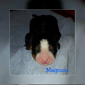 Magnum 18.11.