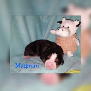 Magnum 22.11.