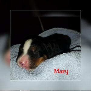 Mary 18.11.