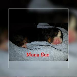 Mona Sue 18.11.