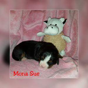 Mona Sue 22.11.