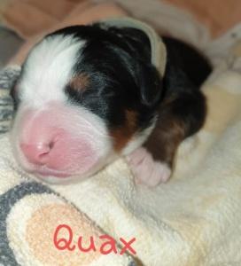 Quax 26.04.